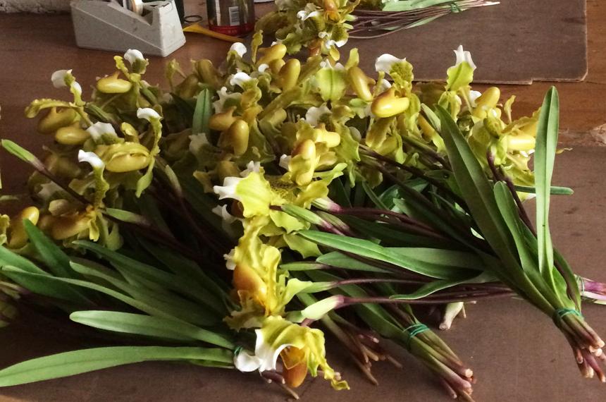 orchideeaprosio-confezionamento